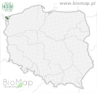 Acalles misellus - Data on distribution in Poland - Biodiversity Map: UTM 10×10 — minimap