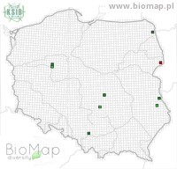 Acentria ephemerella - Data on distribution in Poland - Biodiversity Map: UTM 10×10 — minimap