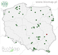 Agonum sexpunctatum - Data on distribution in Poland - Biodiversity Map: UTM 10×10 — minimap