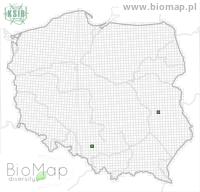 Agrotis desertorum - Data on distribution in Poland - Biodiversity Map: UTM 10×10 — minimap