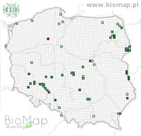 Amalus scortillum - Data on distribution in Poland - Biodiversity Map: UTM 10×10 — minimap