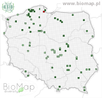 Amara aulica - Data on distribution in Poland - Biodiversity Map: UTM 10×10 — minimap
