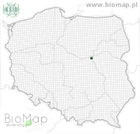 Amara makolskii - Data on distribution in Poland - Biodiversity Map: UTM 10×10 — minimap