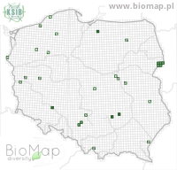 Amischa analis - Data on distribution in Poland - Biodiversity Map: UTM 10×10 — minimap