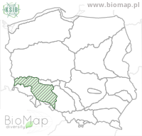 Ampedus nigrinus auripes - Data on distribution in Poland - Biodiversity Map: KFP regions — minimap