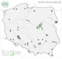 Ampedus nigroflavus - Data on distribution in Poland - Biodiversity Map: UTM 10×10 — minimap