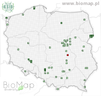 Ampedus sanguinolentus sanguinolentus - Data on distribution in Poland - Biodiversity Map: UTM 10×10 — minimap