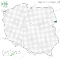 Ampedus suecicus - Data on distribution in Poland - Biodiversity Map: UTM 10×10 — minimap