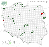 Anatis ocellata - Data on distribution in Poland - Biodiversity Map: UTM 10×10 — minimap