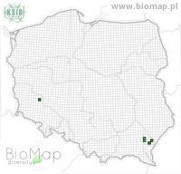Artiora evonymaria - Data on distribution in Poland - Biodiversity Map: UTM 10×10 — minimap
