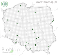 Atheta ravilla - Data on distribution in Poland - Biodiversity Map: UTM 10×10 — minimap