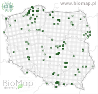 Bembidion lampros - Data on distribution in Poland - Biodiversity Map: UTM 10×10 — minimap