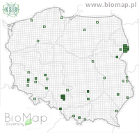 Brachygluta fossulata - Data on distribution in Poland - Biodiversity Map: UTM 10×10 — minimap