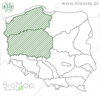 Brigittea latens - Data on distribution in Poland - Biodiversity Map: KFP regions — minimap
