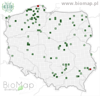 Broscus cephalotes - Data on distribution in Poland - Biodiversity Map: UTM 10×10 — minimap