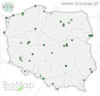 Cantharis nigra - Data on distribution in Poland - Biodiversity Map: UTM 10×10 — minimap
