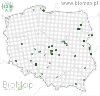 Dorytomus filirostris - Data on distribution in Poland - Biodiversity Map: UTM 10×10 — minimap