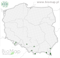 Dropephylla linearis - Data on distribution in Poland - Biodiversity Map: UTM 10×10 — minimap