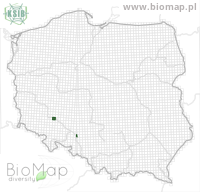 Eupithecia abbreviata - Data on distribution in Poland - Biodiversity Map: UTM 10×10 — minimap