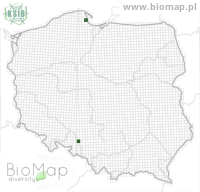 Eupithecia exiguata - Data on distribution in Poland - Biodiversity Map: UTM 10×10 — minimap