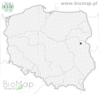 Eupithecia extremeta - Data on distribution in Poland - Biodiversity Map: UTM 10×10 — minimap