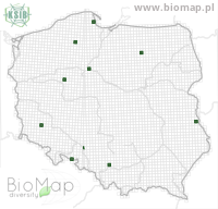 Eupithecia intricata - Data on distribution in Poland - Biodiversity Map: UTM 10×10 — minimap