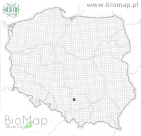 Eupithecia pimpinellata - Data on distribution in Poland - Biodiversity Map: UTM 10×10 — minimap