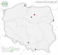 Eupithecia succenturiata - Data on distribution in Poland - Biodiversity Map: UTM 10×10 — minimap