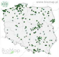 Harpalus rufipes - Data on distribution in Poland - Biodiversity Map: UTM 10×10 — minimap