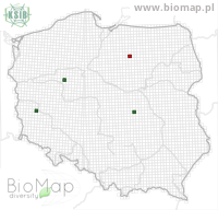 Idaea inquinata - Data on distribution in Poland - Biodiversity Map: UTM 10×10 — minimap