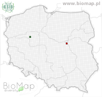 Idaea ochrata - Data on distribution in Poland - Biodiversity Map: UTM 10×10 — minimap