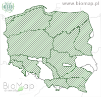 Larinioides patagiatus - Data on distribution in Poland - Biodiversity Map: KFP regions — minimap