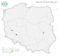Orchestes alni - Data on distribution in Poland - Biodiversity Map: UTM 10×10 — minimap