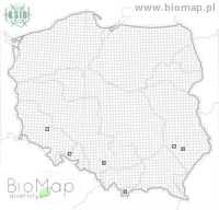 Pityogenes bistridentatus - Data on distribution in Poland - Biodiversity Map: UTM 10×10 — minimap