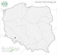 Ptilocephala plumifera - Data on distribution in Poland - Biodiversity Map: UTM 10×10 — minimap