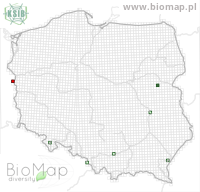 Scolytus scolytus - Data on distribution in Poland - Biodiversity Map: UTM 10×10 — minimap